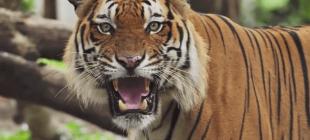 İnsanlara Saldıran 10 Hayvan Türü